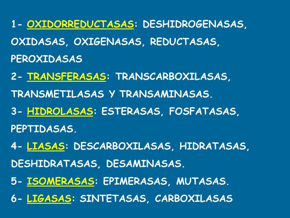 1- OXIDORREDUCTASAS: DESHIDROGENASAS, OXIDASAS, OXIGENASAS, REDUCTASAS, PEROXIDASAS