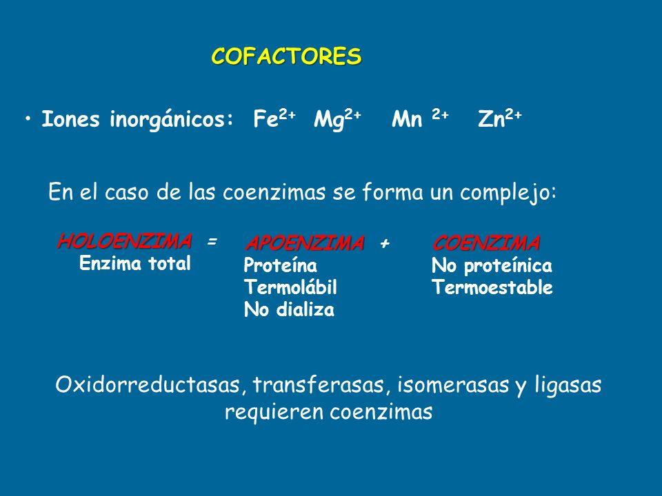 En el caso de las coenzimas se forma un complejo: