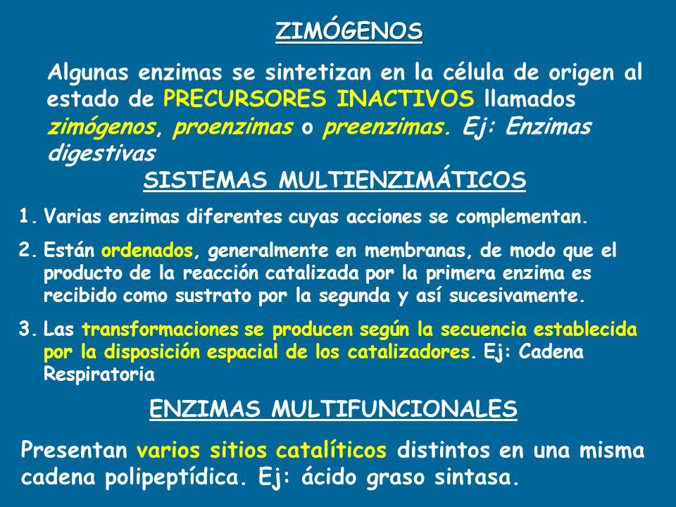 SISTEMAS MULTIENZIMÁTICOS ENZIMAS MULTIFUNCIONALES