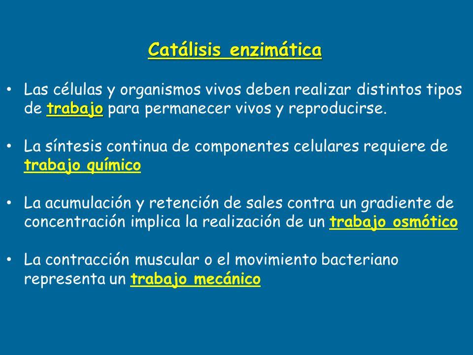Catálisis enzimática Las células y organismos vivos deben realizar distintos tipos de trabajo para permanecer vivos y reproducirse.