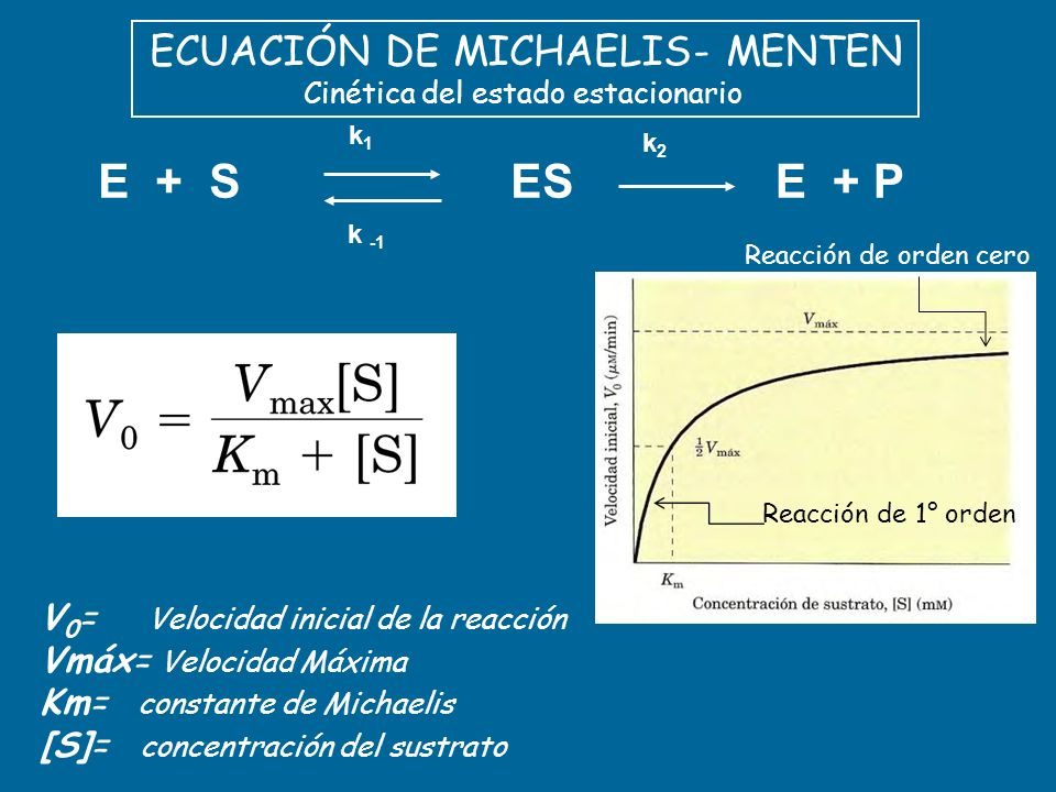 E + P ES E + S ECUACIÓN DE MICHAELIS- MENTEN