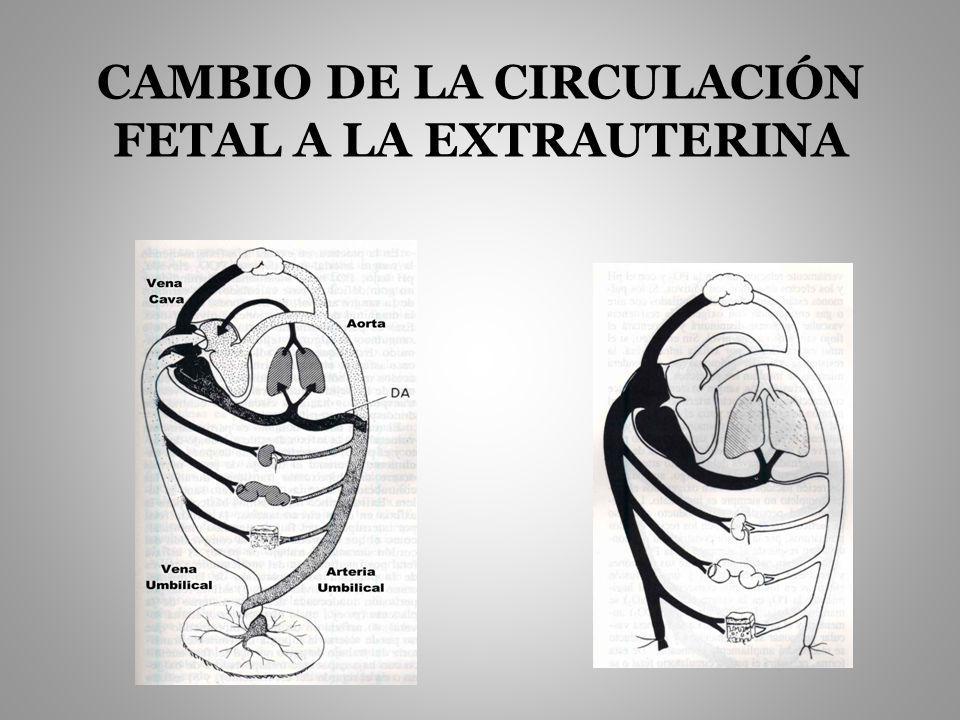 CAMBIO DE LA CIRCULACIÓN FETAL A LA EXTRAUTERINA