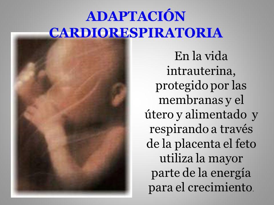 ADAPTACIÓN CARDIORESPIRATORIA