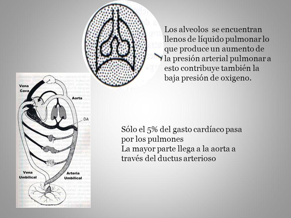Los alveolos se encuentran llenos de líquido pulmonar lo que produce un aumento de la presión arterial pulmonar a esto contribuye también la baja presión de oxigeno.