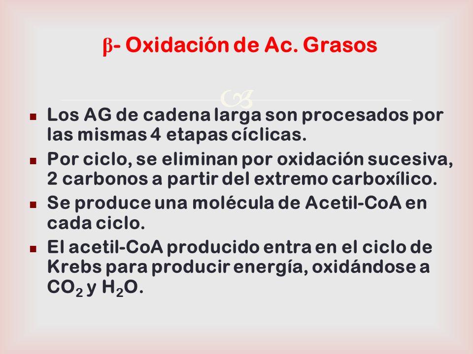 β- Oxidación de Ac. Grasos