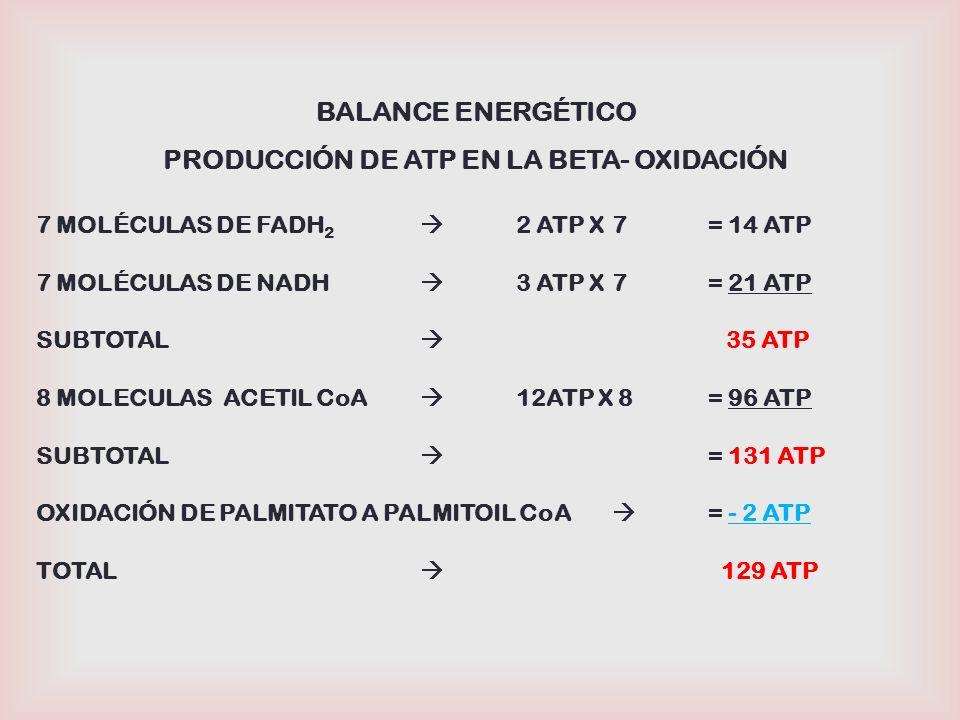 PRODUCCIÓN DE ATP EN LA BETA- OXIDACIÓN
