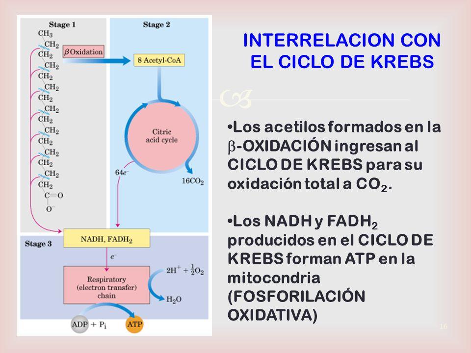 INTERRELACION CON EL CICLO DE KREBS
