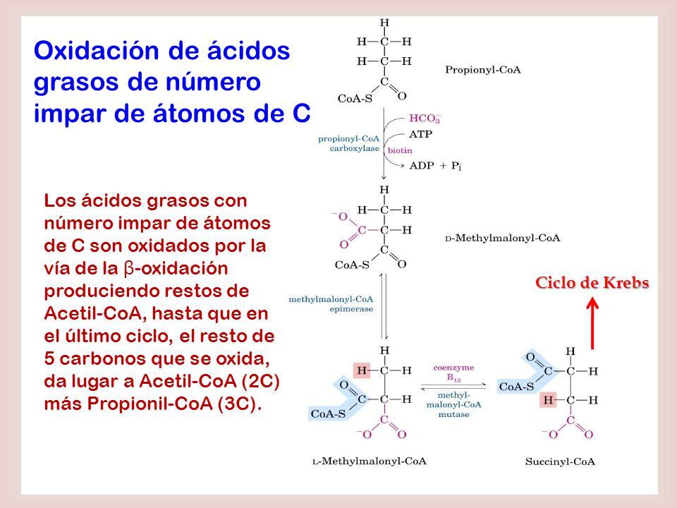 Oxidación de ácidos grasos de número impar de átomos de C