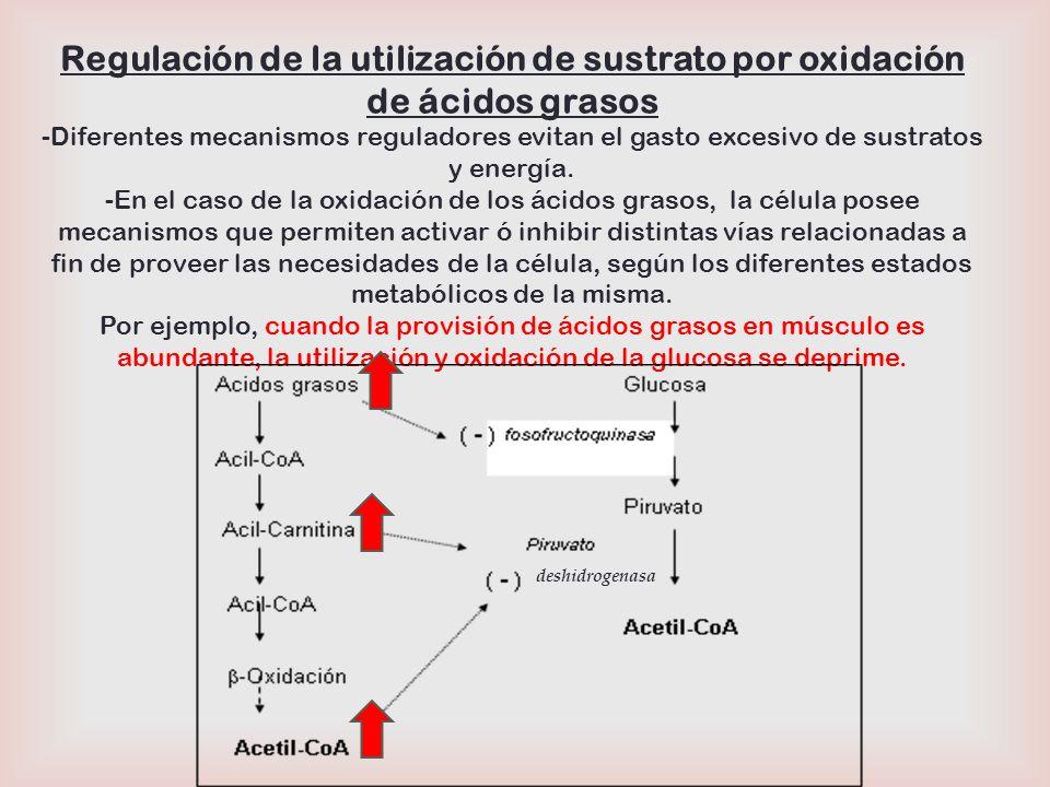 Regulación de la utilización de sustrato por oxidación de ácidos grasos