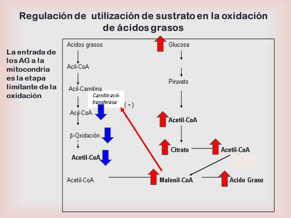 Regulación de utilización de sustrato en la oxidación de ácidos grasos