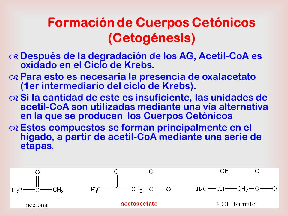 Formación de Cuerpos Cetónicos (Cetogénesis)
