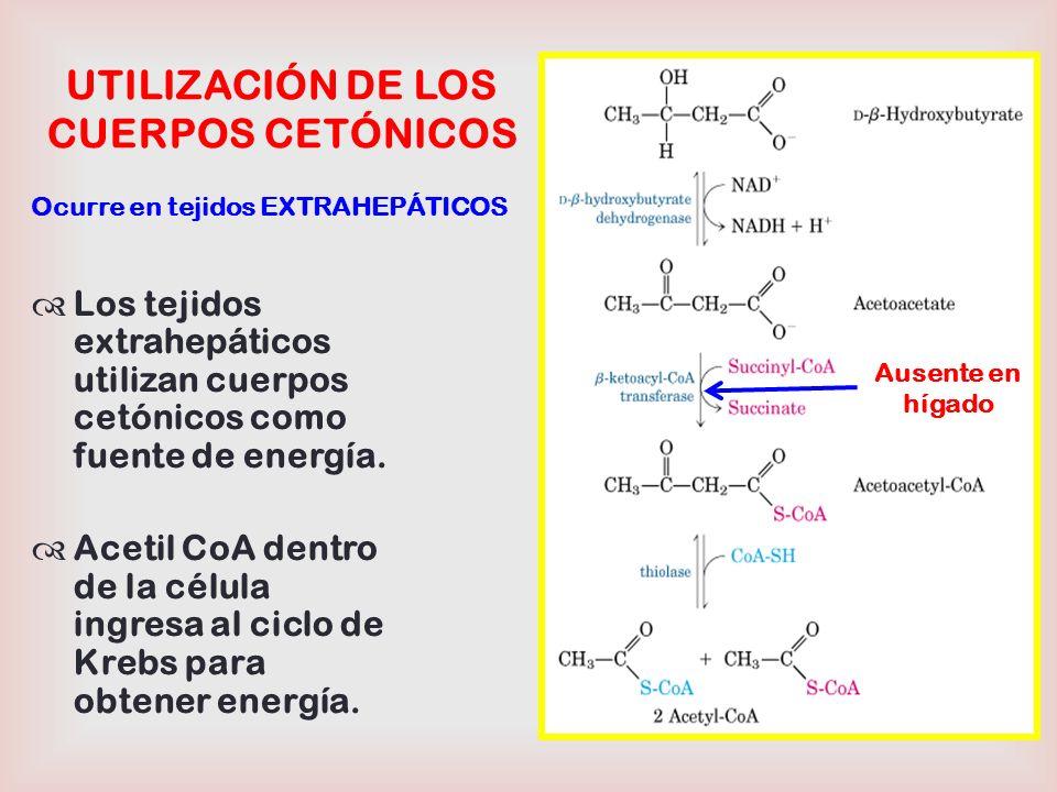 UTILIZACIÓN DE LOS CUERPOS CETÓNICOS