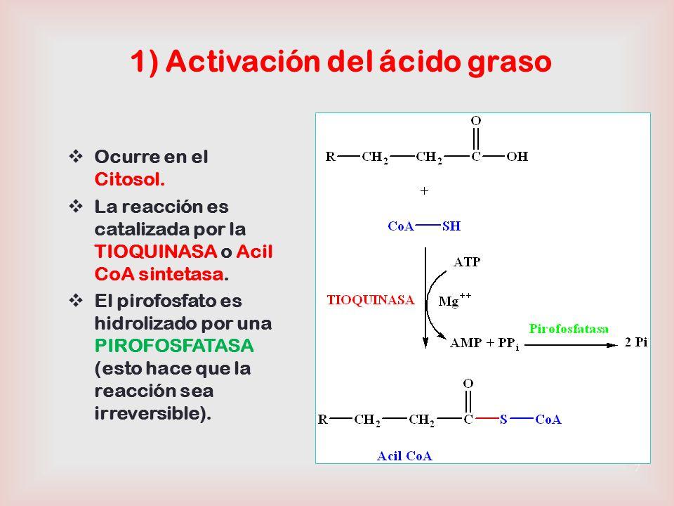 1) Activación del ácido graso