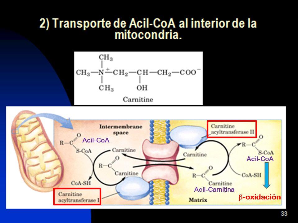 Acil-CoA Acil-CoA Acil-Carnitina -oxidación