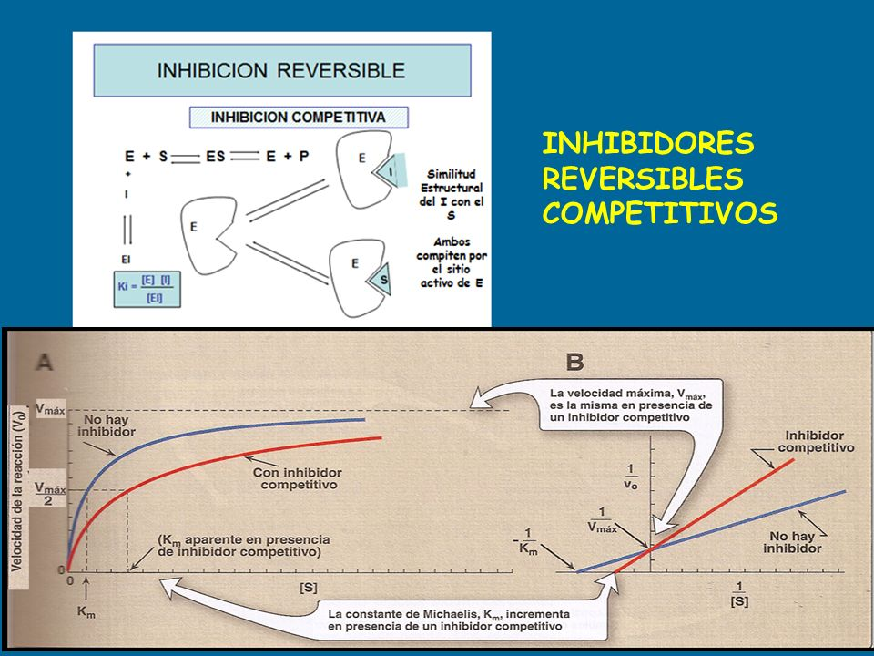 INHIBIDORES REVERSIBLES COMPETITIVOS