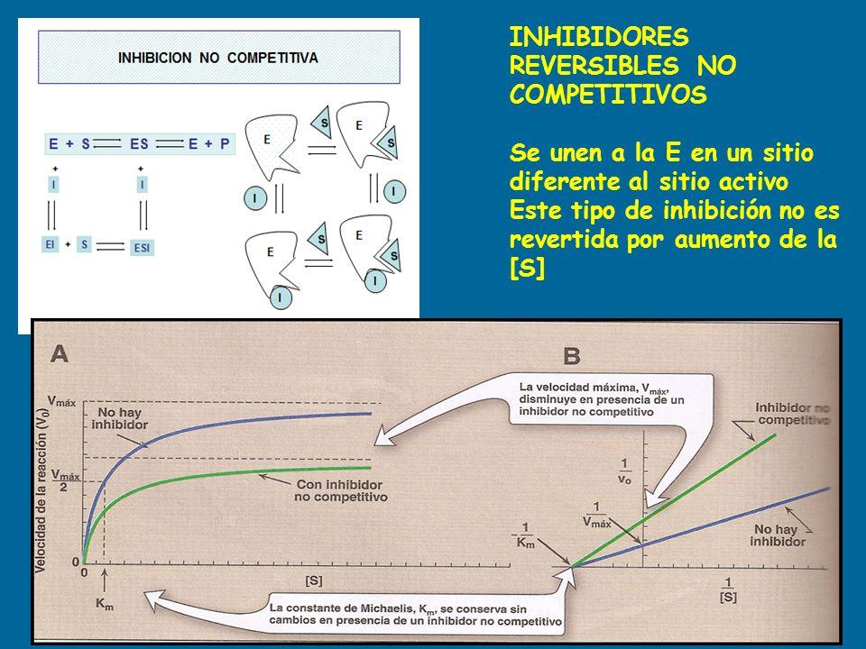 INHIBIDORES REVERSIBLES NO COMPETITIVOS
