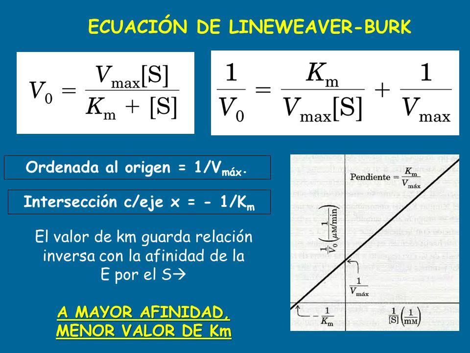Ordenada al origen = 1/Vmáx. Intersección c/eje x = - 1/Km