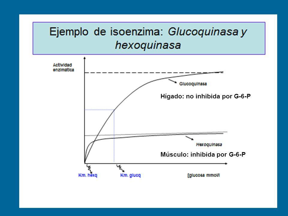 Hígado: no inhibida por G-6-P