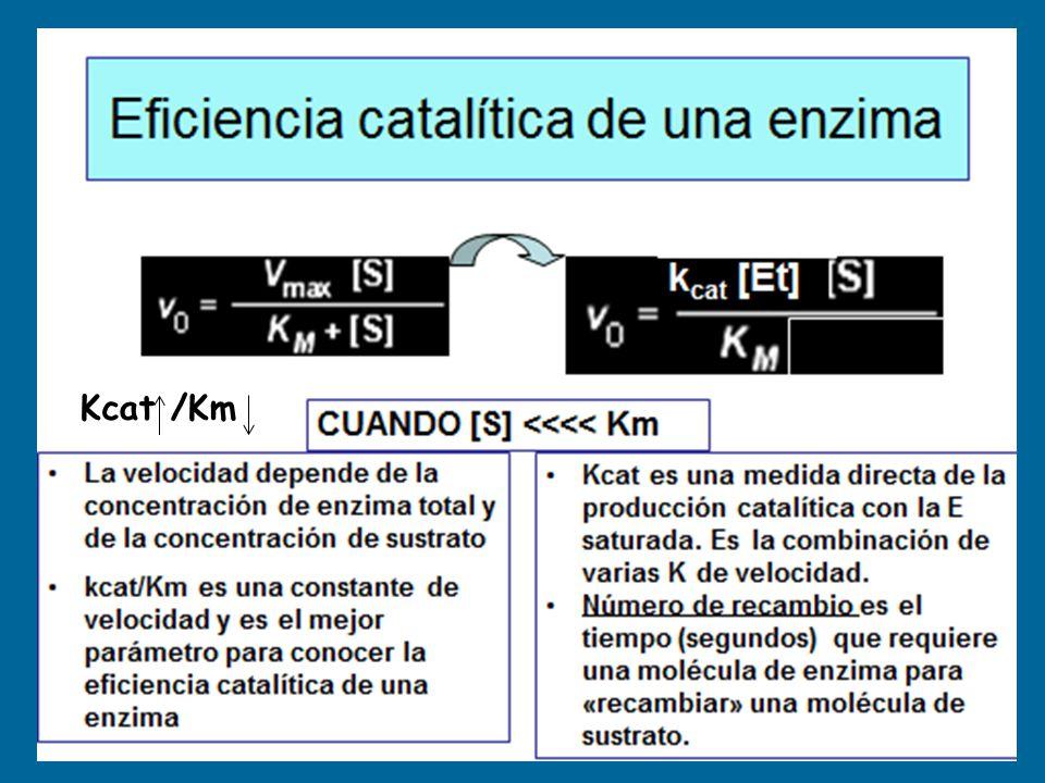 Kcat /Km