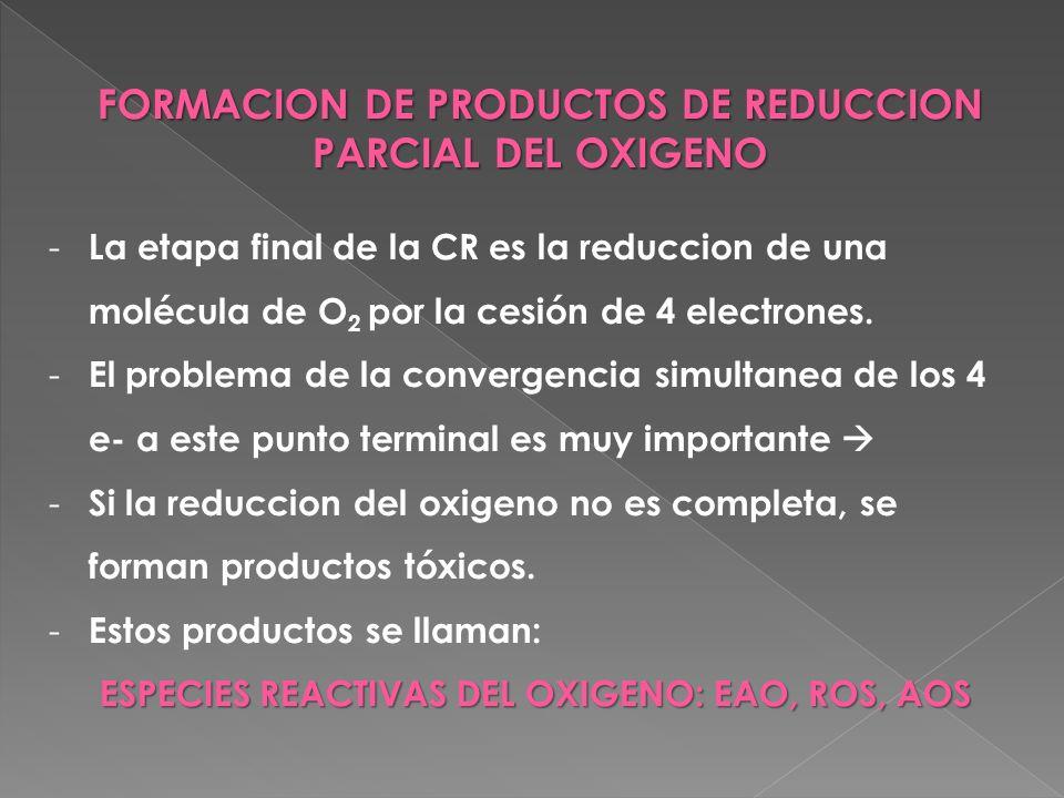 FORMACION DE PRODUCTOS DE REDUCCION PARCIAL DEL OXIGENO