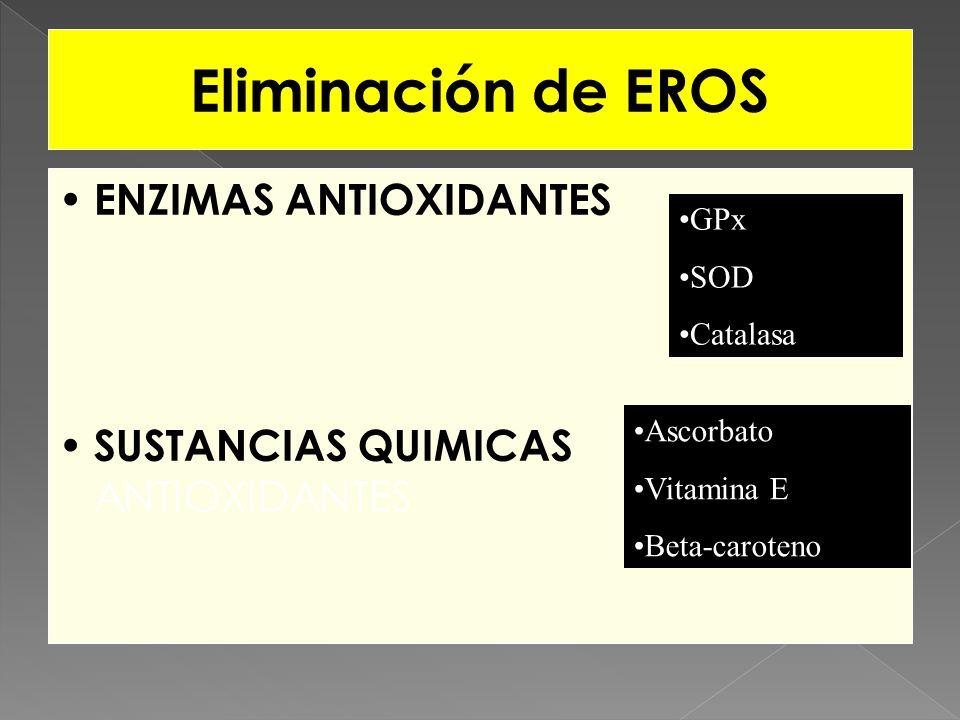 Eliminación de EROS ENZIMAS ANTIOXIDANTES