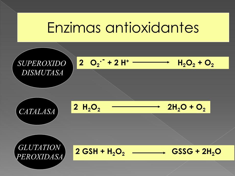 Enzimas antioxidantes