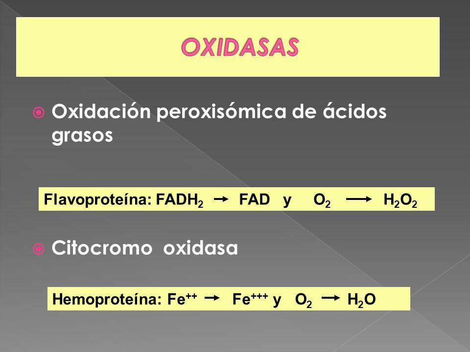 OXIDASAS Oxidación peroxisómica de ácidos grasos Citocromo oxidasa