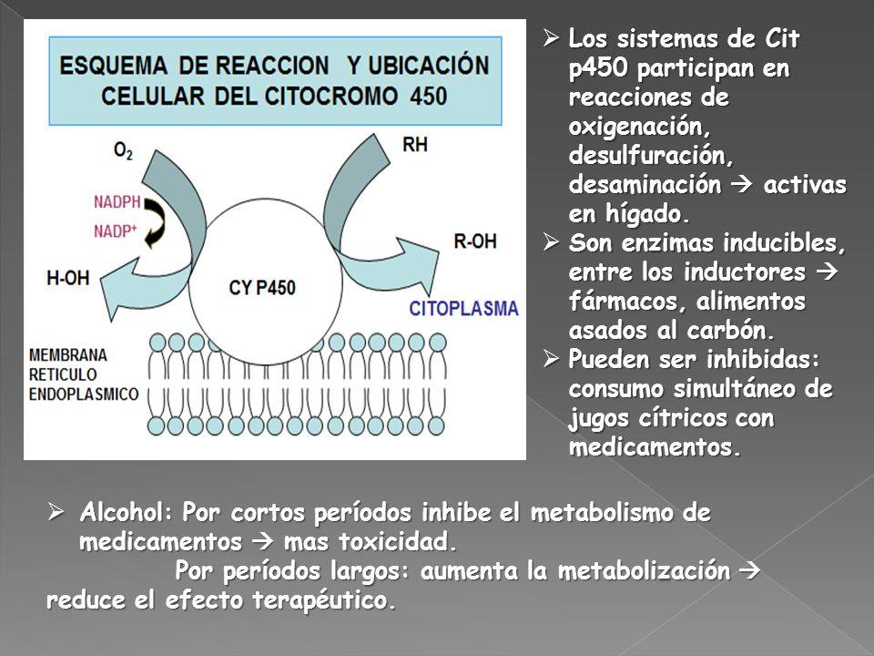 Los sistemas de Cit p450 participan en reacciones de oxigenación, desulfuración, desaminación  activas en hígado.