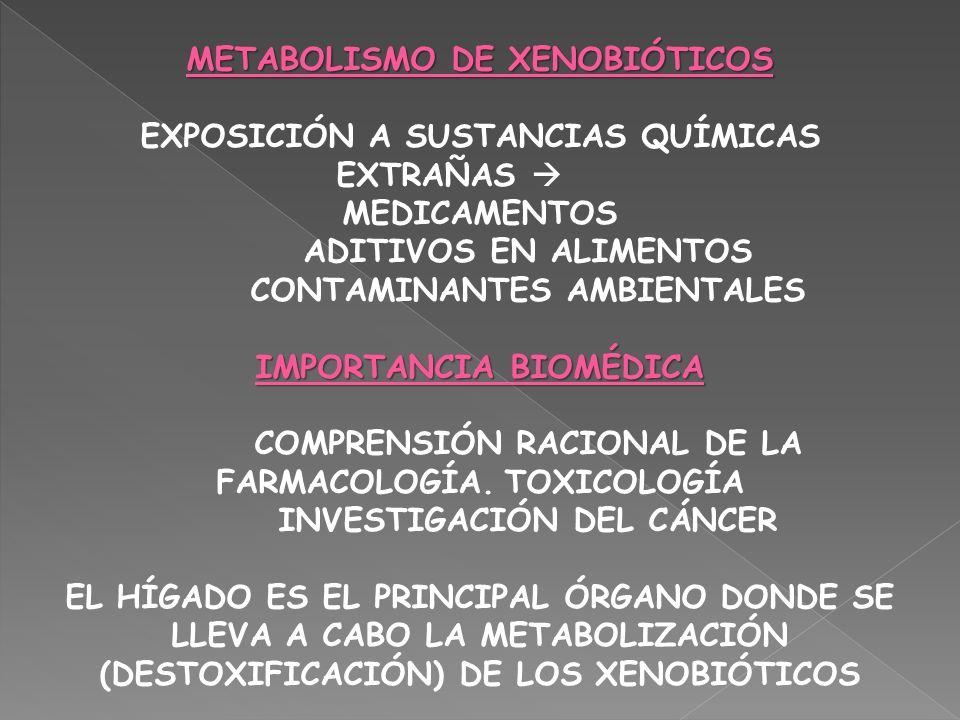 METABOLISMO DE XENOBIÓTICOS