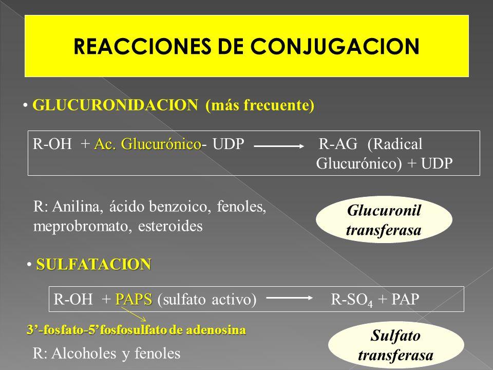 REACCIONES DE CONJUGACION