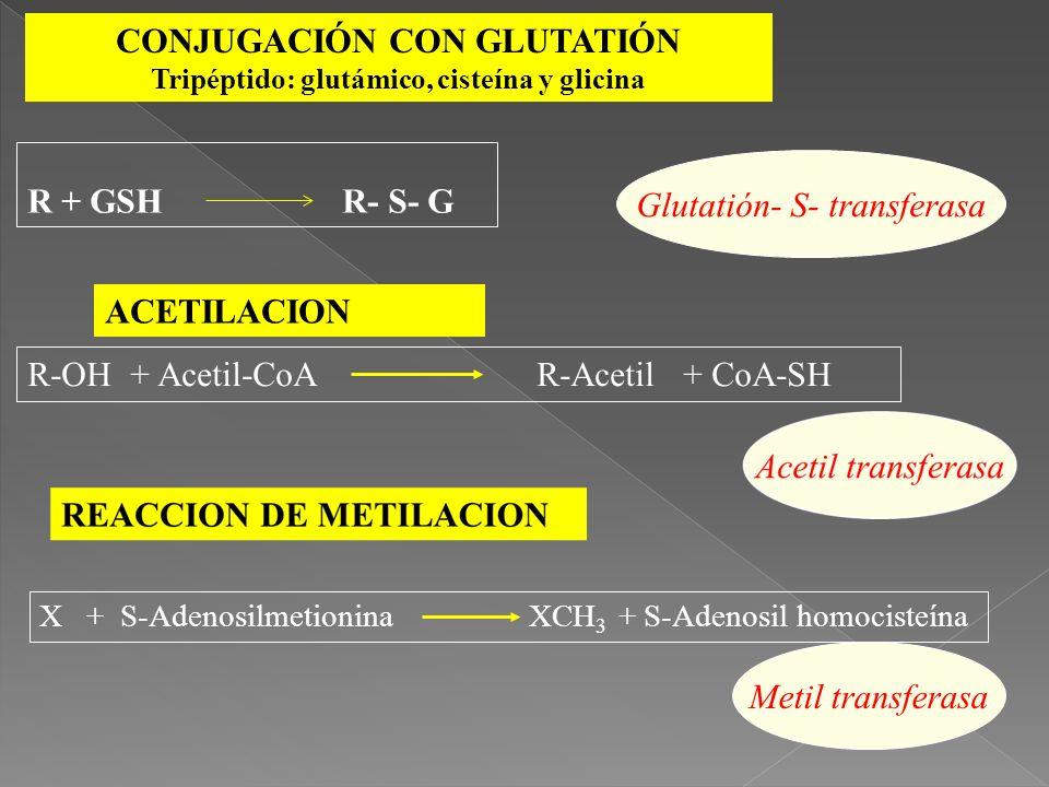 CONJUGACIÓN CON GLUTATIÓN Tripéptido: glutámico, cisteína y glicina