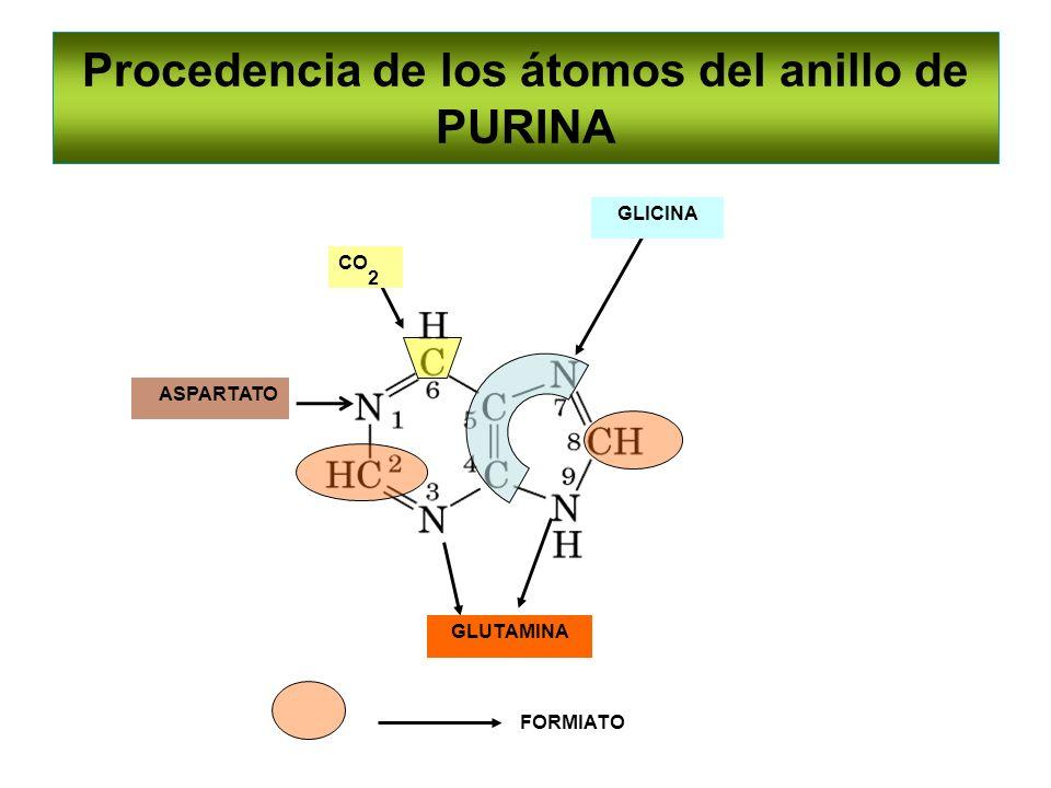 Procedencia de los átomos del anillo de PURINA