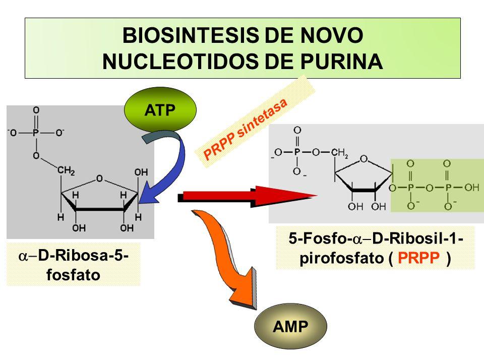 BIOSINTESIS DE NOVO NUCLEOTIDOS DE PURINA