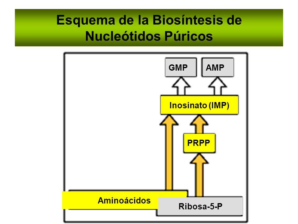 Esquema de la Biosíntesis de Nucleótidos Púricos