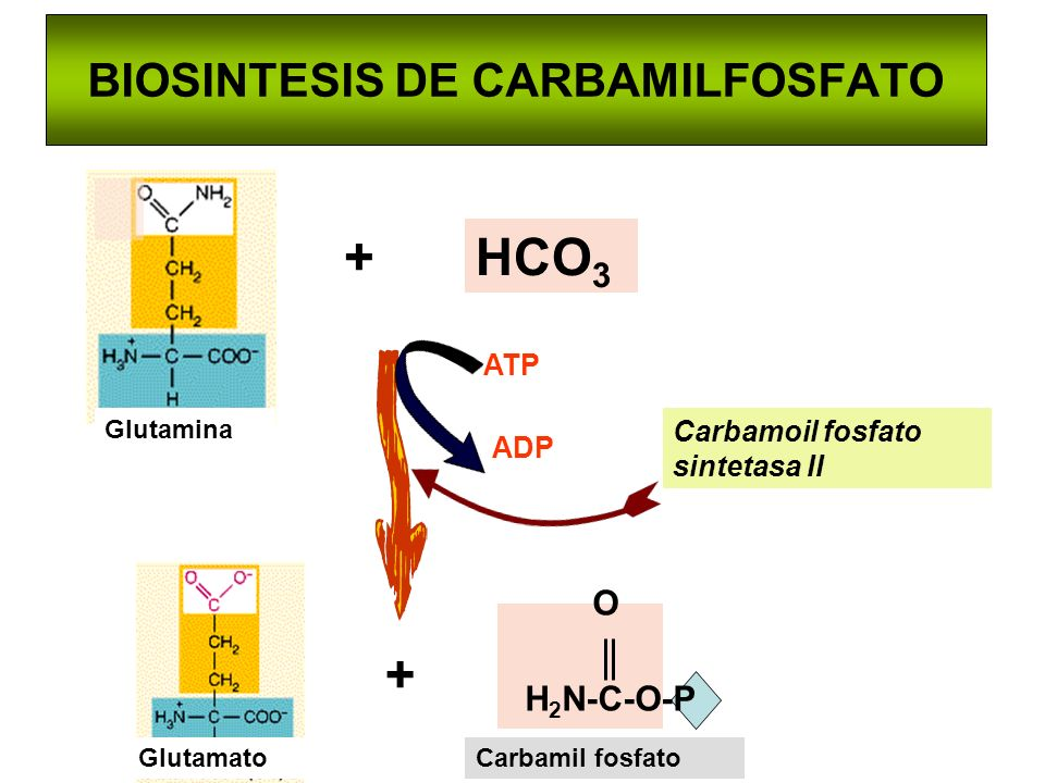 BIOSINTESIS DE CARBAMILFOSFATO