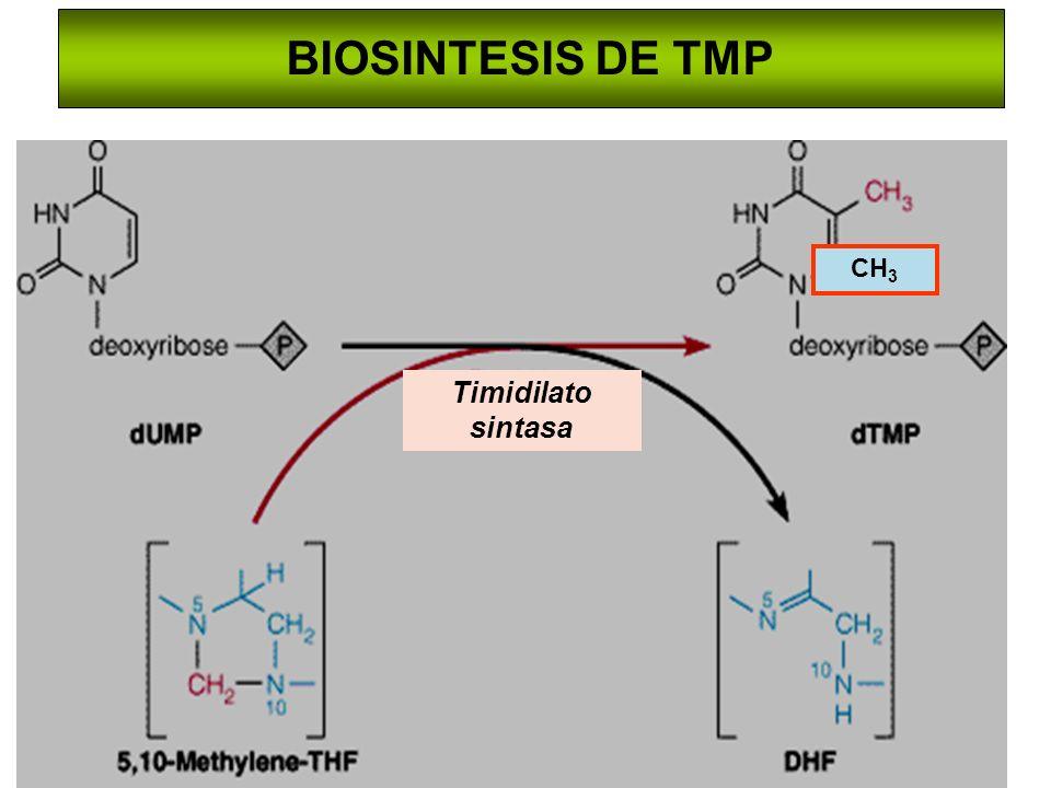 BIOSINTESIS DE TMP CH3 Timidilato sintasa