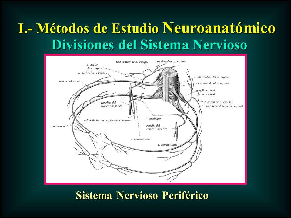 I.- Métodos de Estudio Neuroanatómico