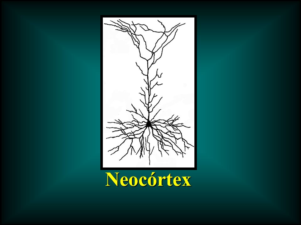 Neocórtex