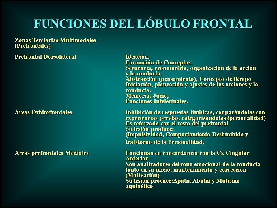 FUNCIONES DEL LÓBULO FRONTAL