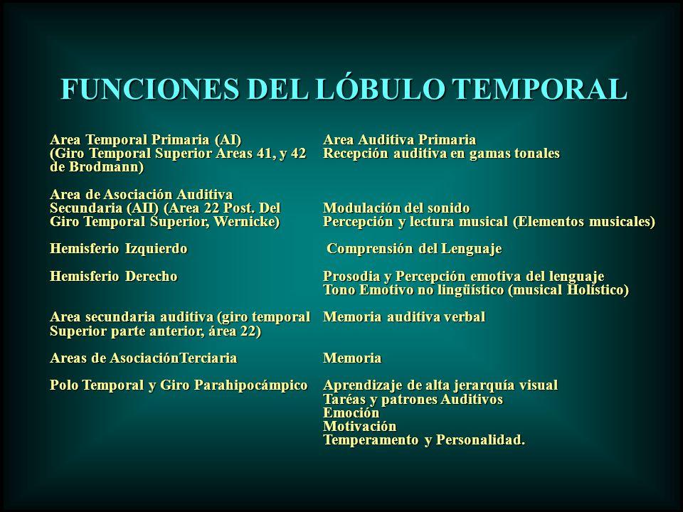 FUNCIONES DEL LÓBULO TEMPORAL