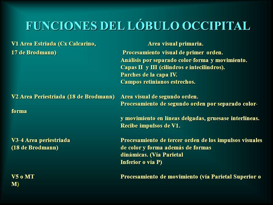 FUNCIONES DEL LÓBULO OCCIPITAL