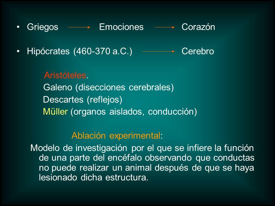Griegos Emociones Corazón Hipócrates (460-370 a.C.) Cerebro