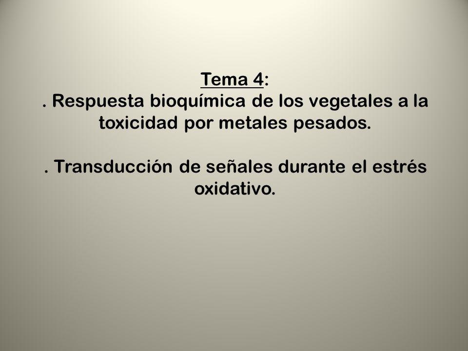 . Transducción de señales durante el estrés oxidativo.