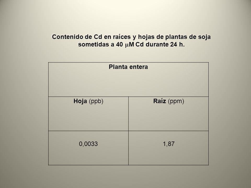 Contenido de Cd en raíces y hojas de plantas de soja sometidas a 40 mM Cd durante 24 h.