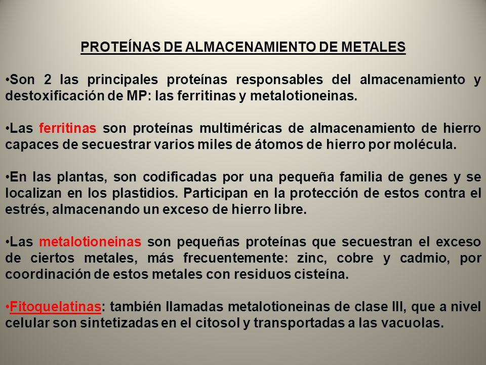 PROTEÍNAS DE ALMACENAMIENTO DE METALES