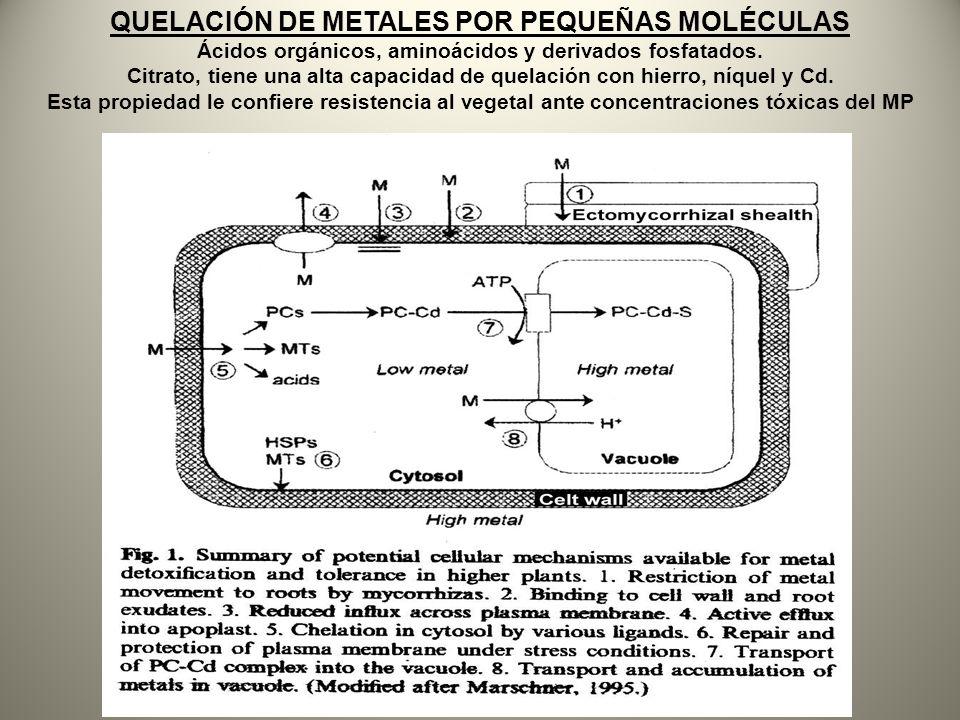 QUELACIÓN DE METALES POR PEQUEÑAS MOLÉCULAS
