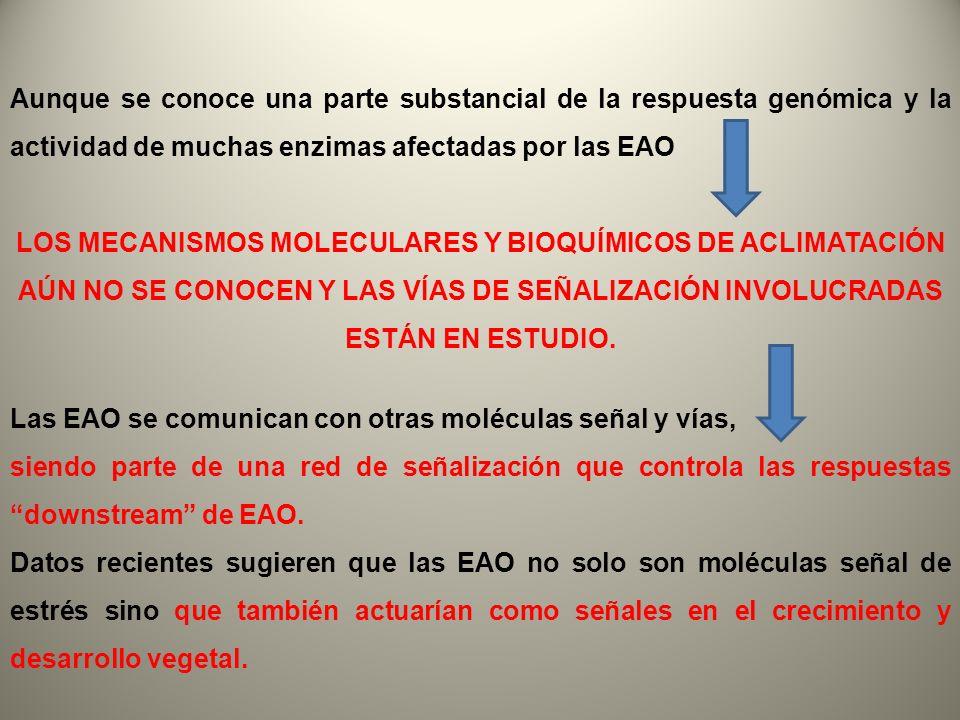 Aunque se conoce una parte substancial de la respuesta genómica y la actividad de muchas enzimas afectadas por las EAO