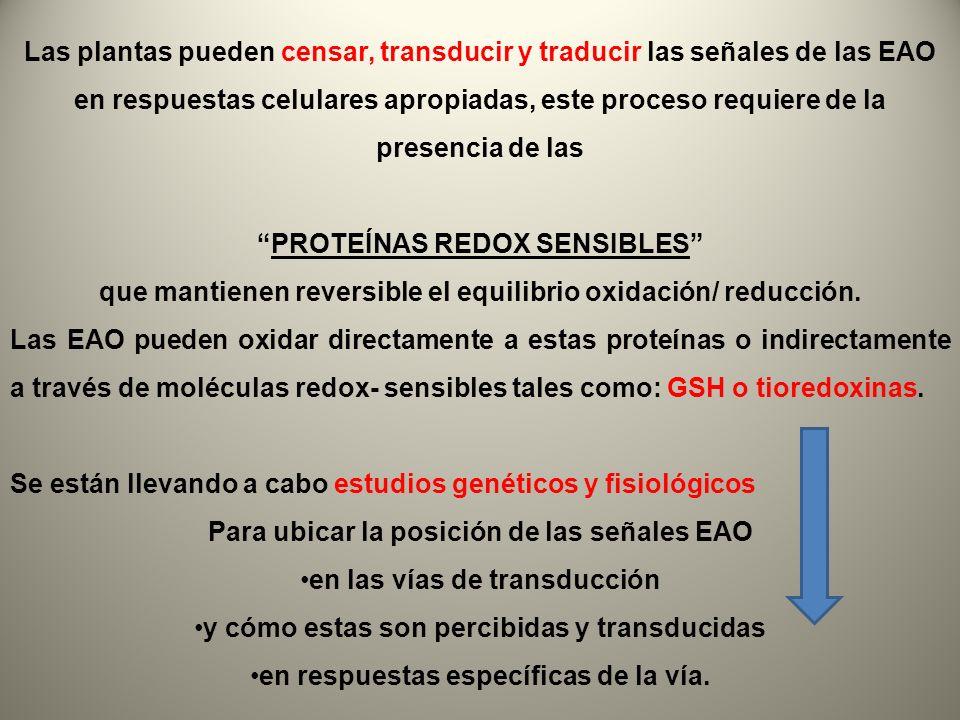 PROTEÍNAS REDOX SENSIBLES