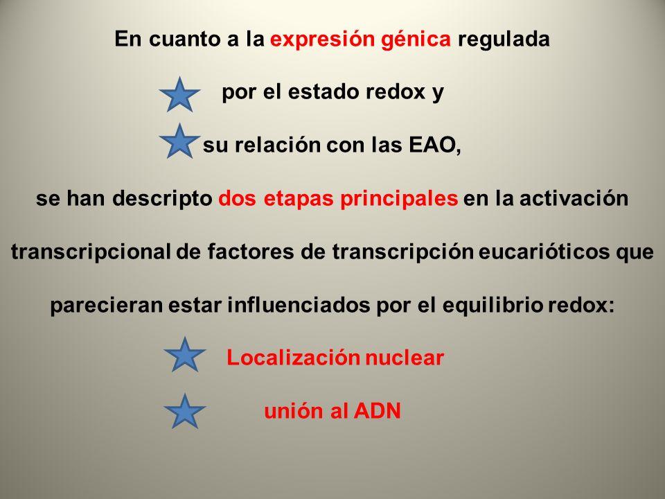 En cuanto a la expresión génica regulada