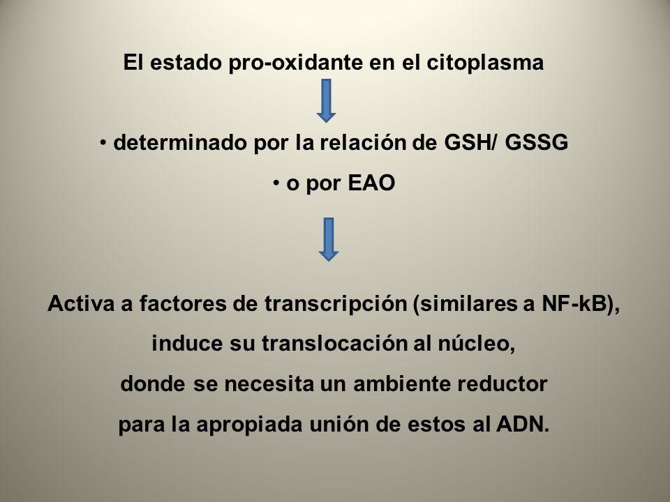 El estado pro-oxidante en el citoplasma
